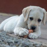 U svim ostalim državama je dozvoljeno izvođenje pasa tokom celog dana 10