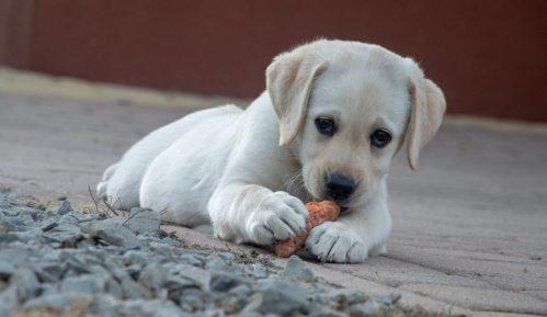 U svim ostalim državama je dozvoljeno izvođenje pasa tokom celog dana 11