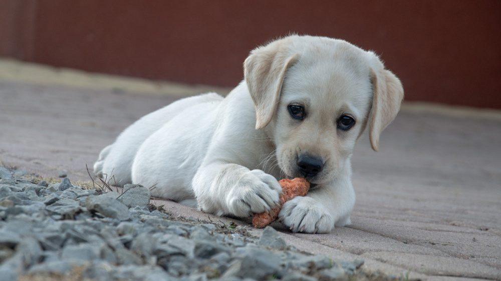 U svim ostalim državama je dozvoljeno izvođenje pasa tokom celog dana 1