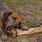 Pas u Jagodini izujedao sedam osoba, krivična prijava protiv vlasnice 14