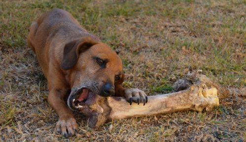 Zašto treba obratiti pažnju na jak apetit psa 1