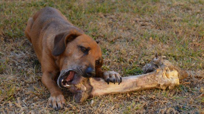 Zašto treba obratiti pažnju na jak apetit psa 5