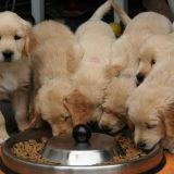 Zrenjaninskom udruženju za brigu o životinjama ukraden 81 kilogram hrane 1