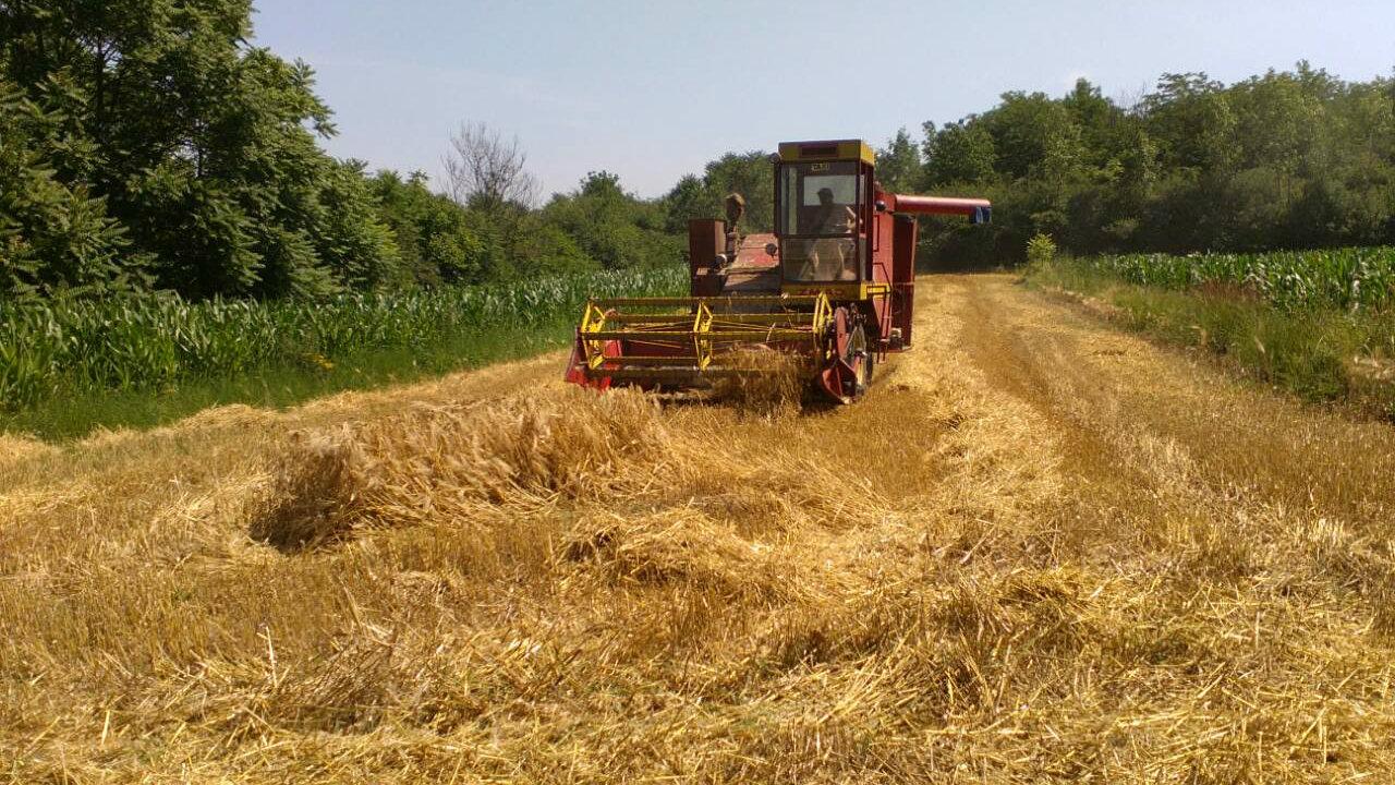 Zašto je preskočena poljoprivreda? 1