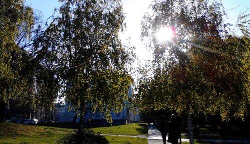 Demokratska omladina osudila seču stabala u Karađorđevom parku 3