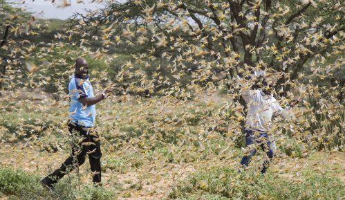 Skakavci, korona virus i poplave ugrožavaju Istočnu Afriku 10