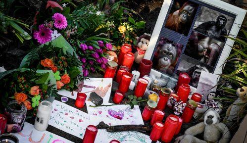 Desetine majmuna stradalo u požaru u zoo vrtu u Nemačkoj 2