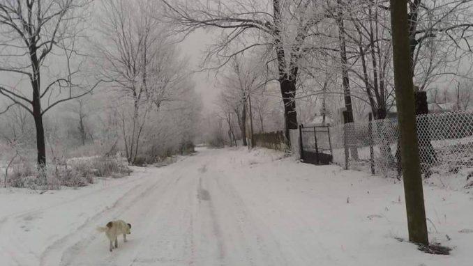 Sjenica: Vanredna situacija, čiste se prioritetni putevi 3