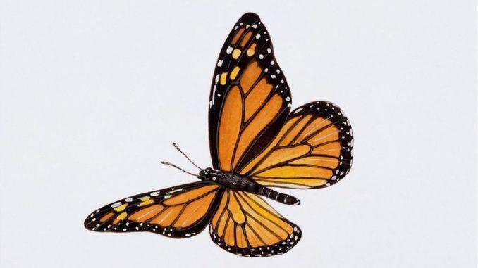 Priroda, bubašvabe i pčele: Šta će se desiti ako izumru insekti 4