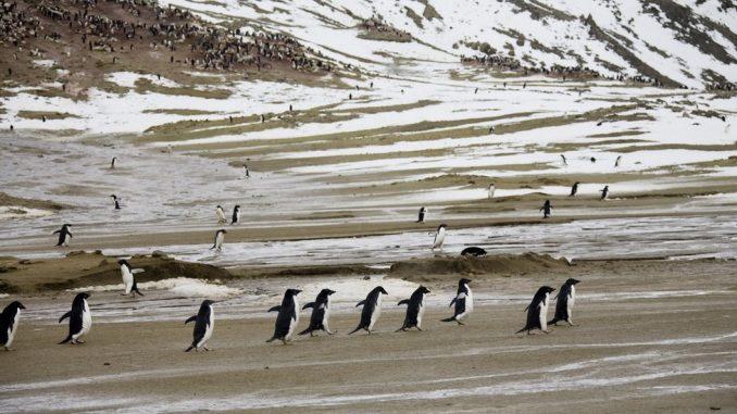 Antarktik i globalno zagrevanje: Prolećnih 20 stepeni u svetu večnog leda 3
