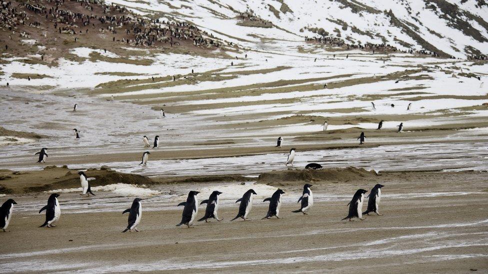 Penguins on Seymour Island, Antarctica