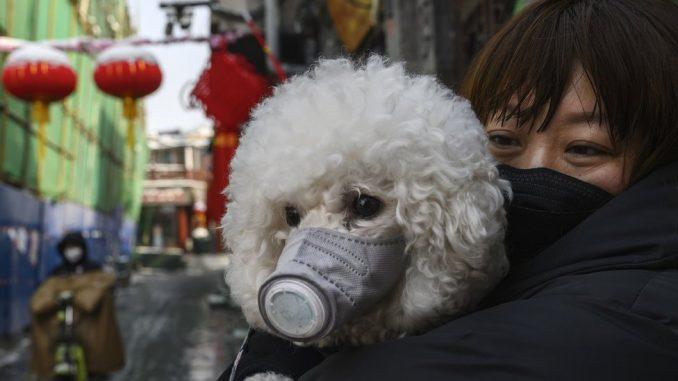 Korona virus: Priča o Balkankama iz Kine - mesec dana kasnije 4