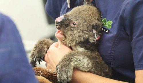 Australija: Hitna pomoć za 113 vrsta ugroženih požarima 1