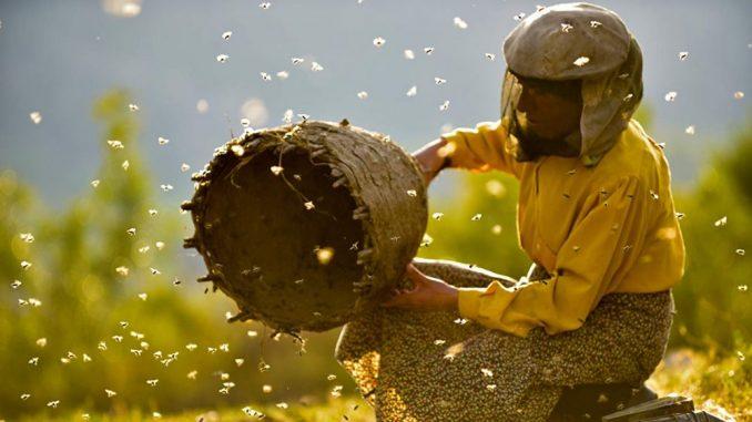Muratova: Ako uzmemo jednog Oskara biće pola-pola, kao i sa medom i pčelama 4