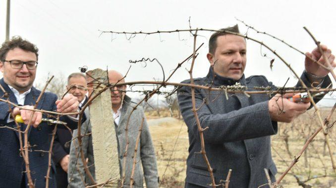 """Tradicionalno orezivanje """"Tikveš"""" vinograda u čast Sv. Trifuna 1"""