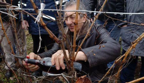Ralja: Ima nade za srpske vinograde 2