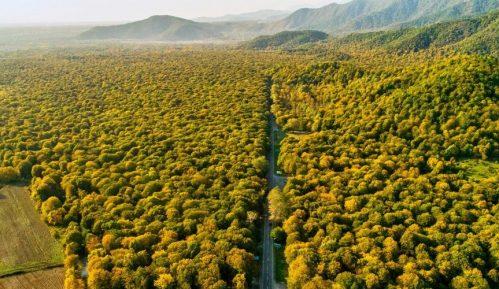 Startap planira da uz pomoć dronova zasadi 500 milijardi stabala do 2050. 1