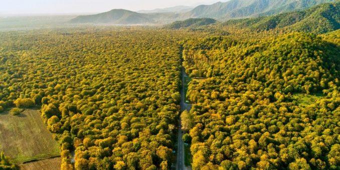 Startap planira da uz pomoć dronova zasadi 500 milijardi stabala do 2050. 5