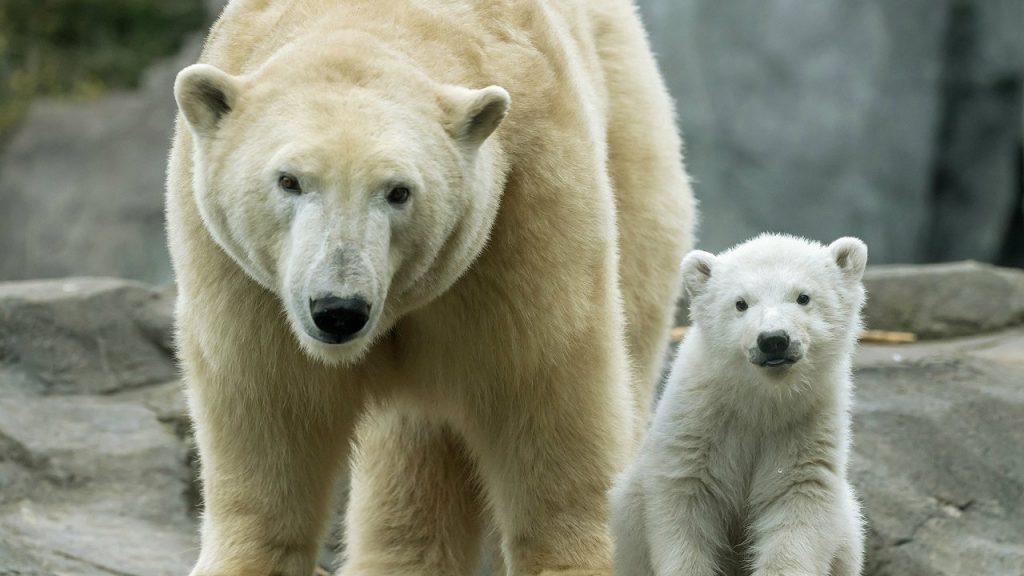 Međunarodni dan polarnih medveda 2