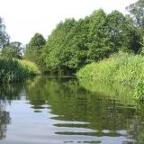 Ekolozi pronašli ostatke zaštitnih rukavica i maski u velikim evropskim rekama 14