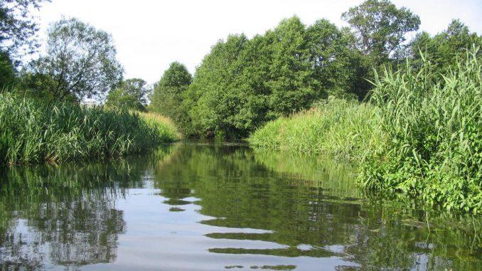 Ekolozi pronašli ostatke zaštitnih rukavica i maski u velikim evropskim rekama 1