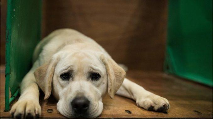 "Trovanje pasa i simptomi: ""Nekad je dovoljno da pas samo onjuši otrov"" 2"