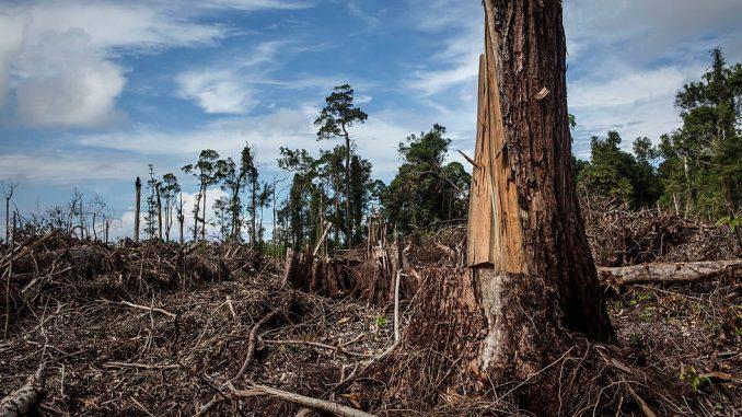 Palmino ulje: Može li svet da se odrekne ovog proizvoda da bi spasao prašume 3