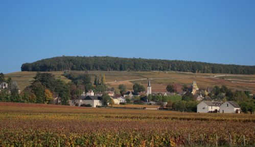 Francuska: Put velikih vinograda 13
