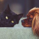 Francuski veterinari upozorili da mačke i pse ne treba dezinfikovati alkoholom 11