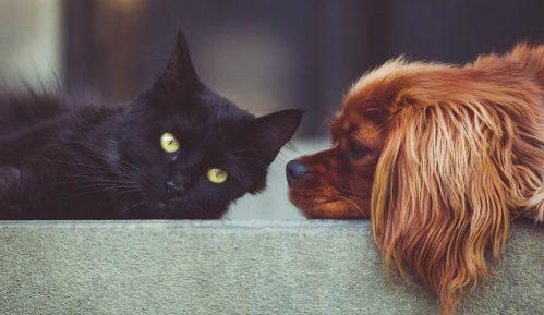 Francuski veterinari upozorili da mačke i pse ne treba dezinfikovati alkoholom 9