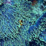 Australija zbog turizma sprečila UNESKO da njen Veliki koralni greben proglasi za ugrožen 3