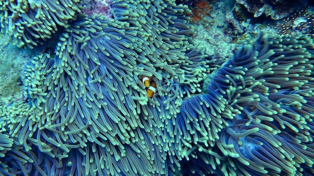 Da li će korali preživeti klimatske promene? 2