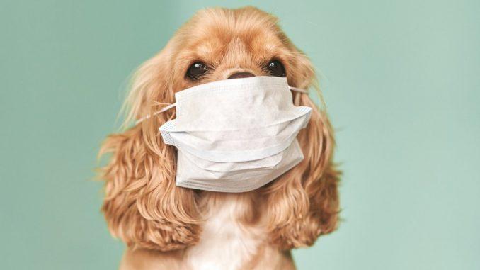 """Šetnja pasa u doba korona virusa: """"To nije hir, već fiziološka potreba"""" 1"""