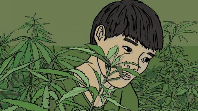 Kako je dečak iz Vijetnama postao rob na britanskoj farmi kanabisa 3
