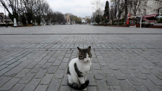 Korona virus i mačke: Kako spasiti najdraže lutalice Istanbula od gladi 3