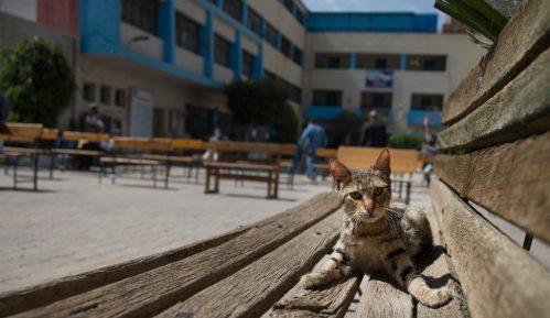 Mačke testirane pozitivno na virus 7