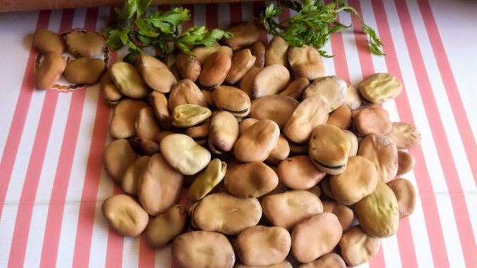 Bob - fava pasulj kao humus (recept) 3