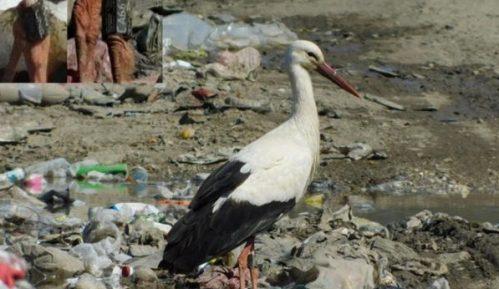 Seoba ptica: Svetski putnici u našim krajevima 4