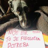 Problemi kućnih ljubimaca u Srbiji tokom vanrednih situacija i dalje nerešeni 9