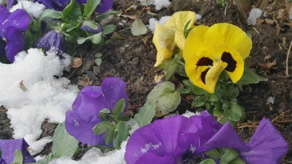 Sneg 24. marta