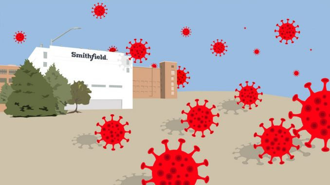 Korona virus i fabrika za preradu mesa u Smitfildu: Neispričana priča o najvećem žarištu u Americi 2