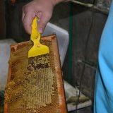 """Korona virus, vanredno stanje i pčele: """"Od pčela zavisi da li će ulje koštati jedan ili pet evra"""" 12"""
