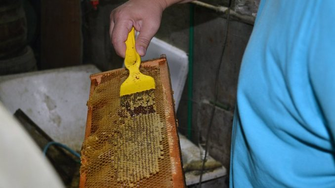 """Korona virus, vanredno stanje i pčele: """"Od pčela zavisi da li će ulje koštati jedan ili pet evra"""" 2"""