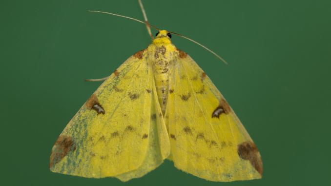 Kriza u prirodi: Zašto ne treba da ubijate moljce 4