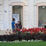 Počela sadnja cveća u Beogradu: Najviše salvije, kadife, vinke, begonije 7