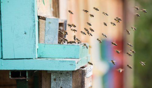 Svetski dan pčela, skoro 10 odsto preti izumiranje 5