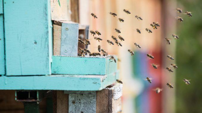 Svetski dan pčela, skoro 10 odsto preti izumiranje 2