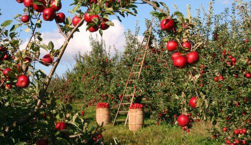U topličkom kraju odličan rod jabuka i krušaka, a nema organizovanog otkupa 12