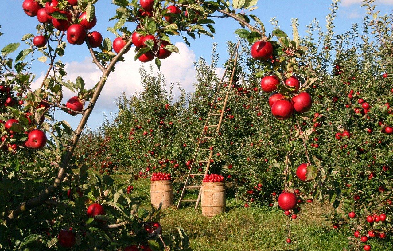 Kako klimatske promene utiču na poljoprivredu u Srbiji? 2