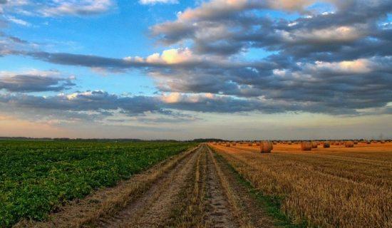 Agrosmart i VOICE: Problem nesavesne primene hemijskih preparata još uvek nerešen 12